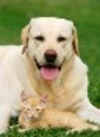Peace of Mind Home & Pet Care - Home